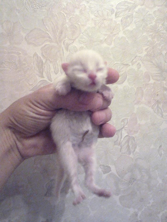 Нашёл котёнка в коробке. Нужна помощь. Томск. Котомафия, Кот