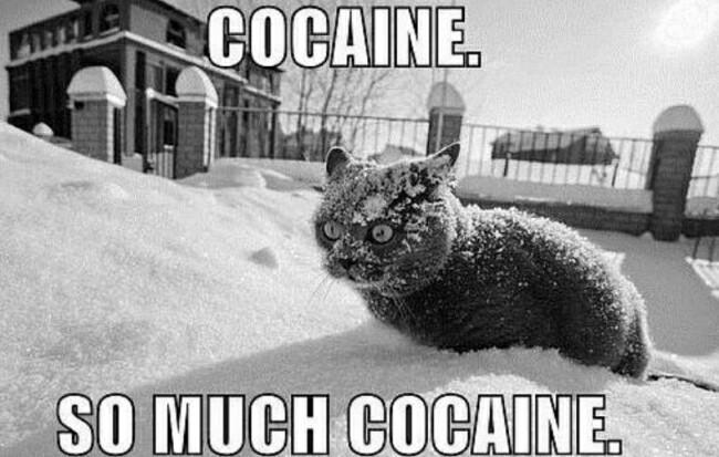 Кокаин! Как много кокаина! Кокаин, Наркотики, Контрабанда, Задержание, Видео, Единая Россия, Плагиат