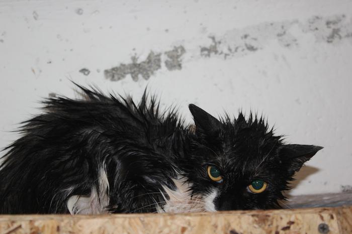 Мокрой ненависти пост Bfbbim, Кот, Лишай, Животные, Мыть или не мыть, Длиннопост, Фотография