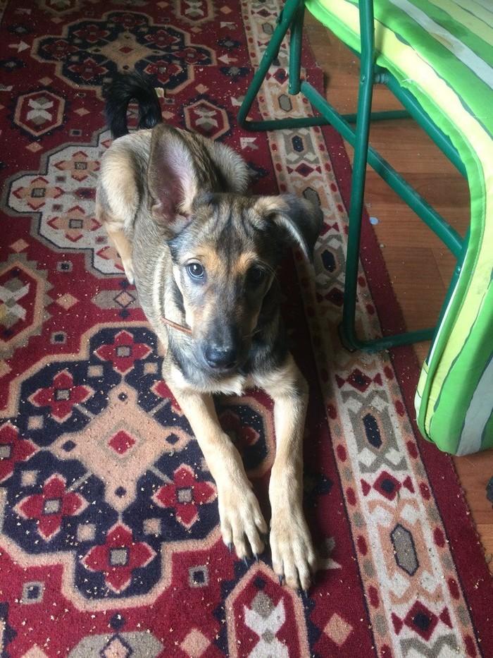 Пес ищет дом. Москва Помощь, Собака, Москва, В добрые руки, Без рейтинга, Длиннопост