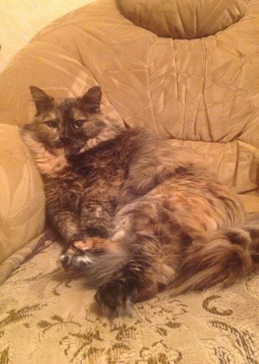 Любимое место Трехцветная кошка, Дарья, Отдых, Кот