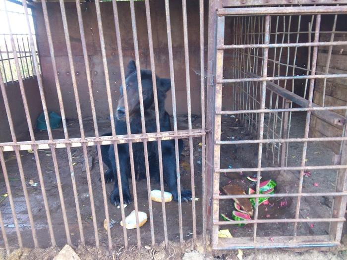 В Прикамье у трассы четыре года живет медведь Пермь, Помощь животным, Без рейтинга, 59ру, Длиннопост
