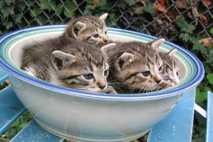 Летний салат из котят