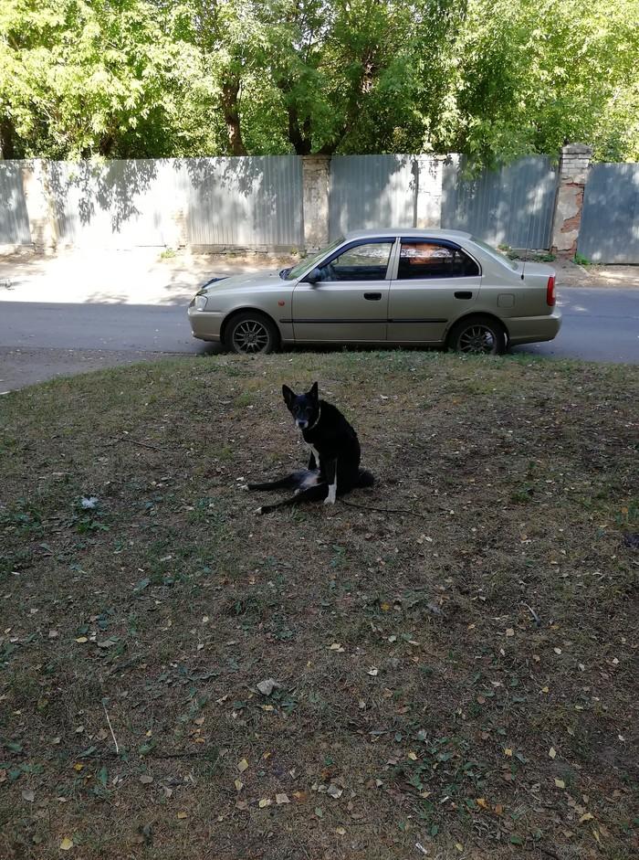 Собака-уставака Жара, Собака, Лето, Приуныл, Длиннопост
