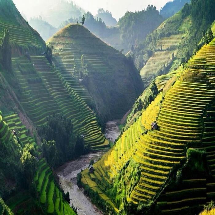 Рисовые террасы во Вьетнаме Вьетнам, Картинки, Рис, Горы, Река