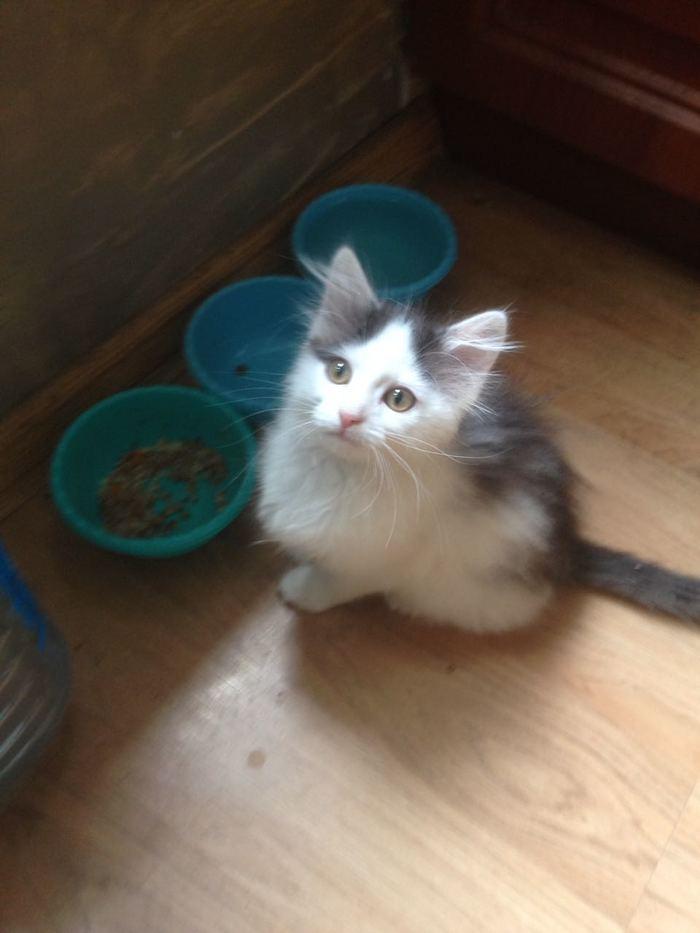 Пропала кошка Без рейтинга, Кот, Пропажа, Мытищи, Помогите найти