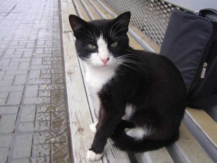 Хатико по-приморски: Кот ждет хозяина на одной из станций пригорода Владивостока. (копипаста) Без рейтинга, Кот, Владивосток, Копипаста, Помощь животным, Длиннопост, Жд вокзал