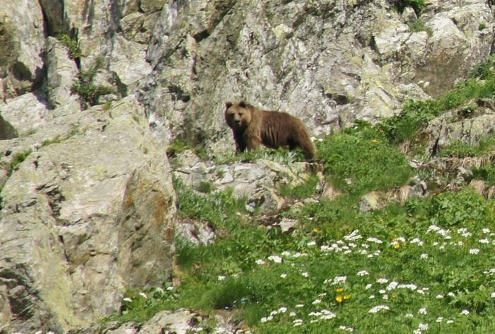 Медведь в горах Медведь, Горы, Поход, Дикая природа