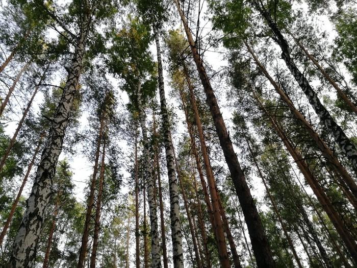 Лес 2 Лес, Опята, Длиннопост