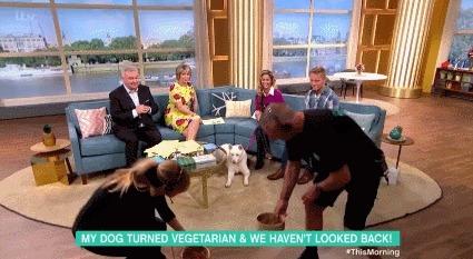 Женщина утверждает, что ее собака стала вегетарианкой, и больше не хочет есть мяса Овощи, Собака, Гифка, Мой хозяин идиот, Вегетарианство