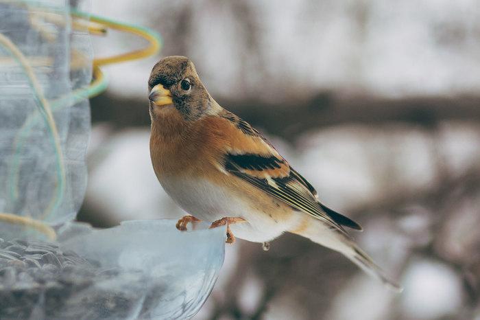 Мои синицы Кормление, Длиннопост, Синица, Кормушка для птиц
