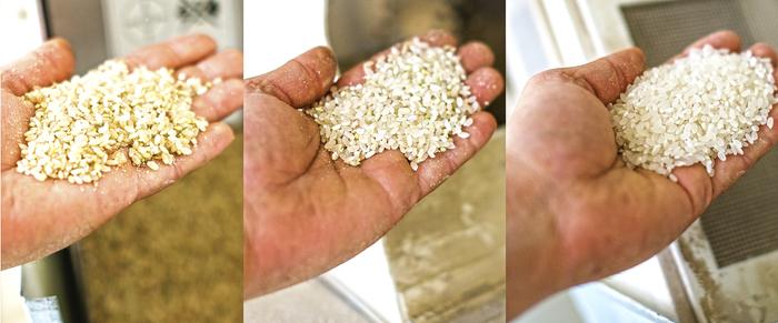 Рис Кубани Рис, Сельское хозяйство, Технологии, Кубань, Производство, Длиннопост