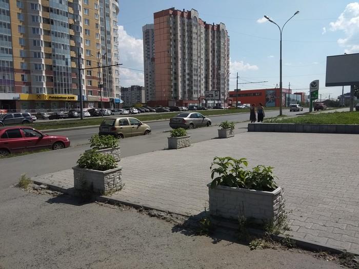 Необычные цветочки. Екатеринбург, Картофель, Неожиданно