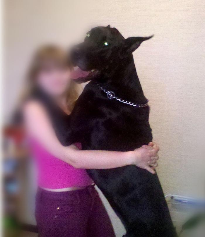 Воспитание собак без люлей и альфачества Собака, Дрессировка, Послушание, Длиннопост