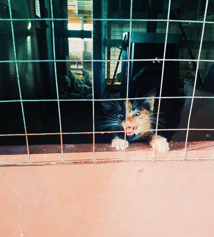 Сво-бо-ду! Кот, Деревня, Валдай, Длиннопост, Трехцветная кошка