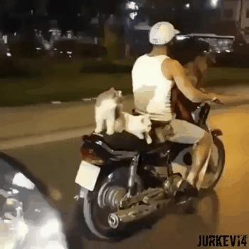 Коты байкеры