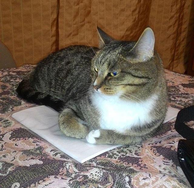 Это твои бумажки что-ли? Теперь мои