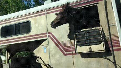 Лошадка на своей волне