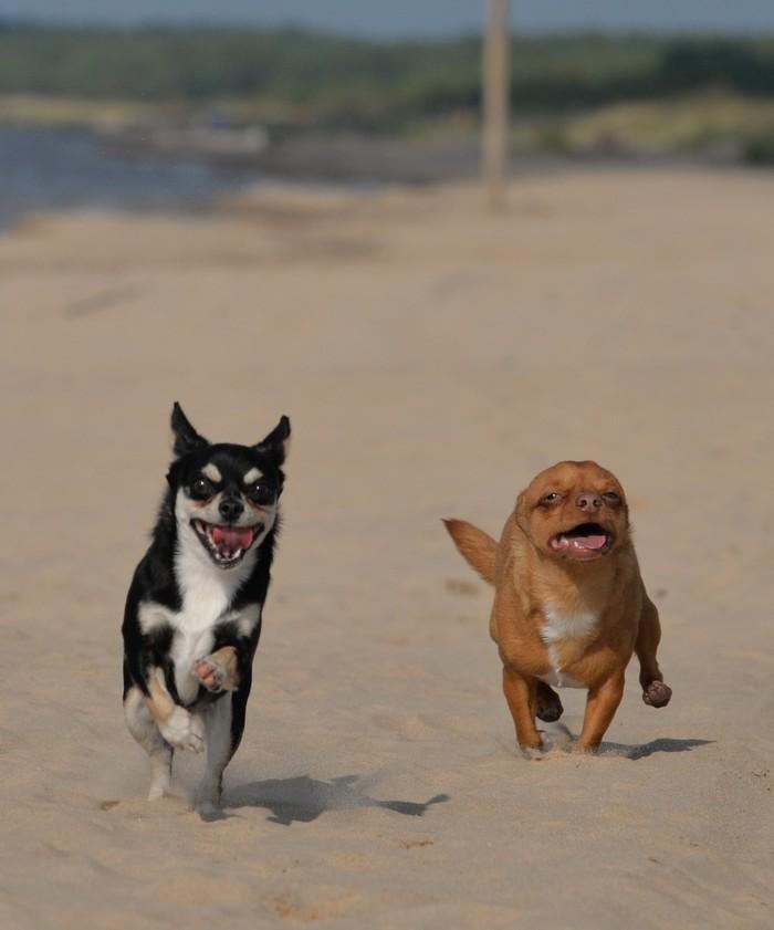 Кууушать Собака, Фотография, Моё, Длиннопост