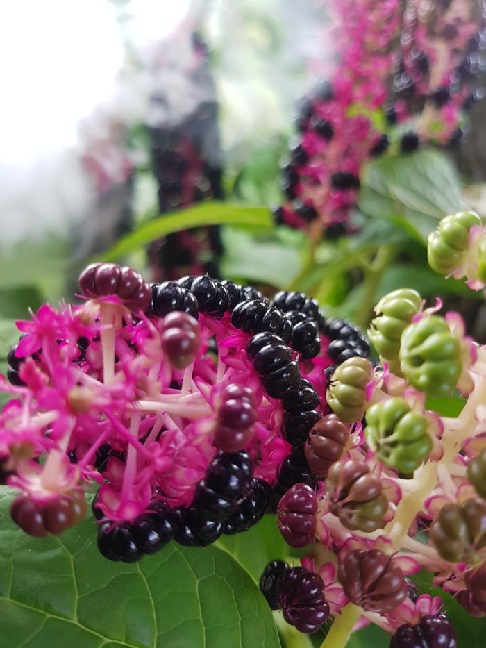 Пост 1.1 Цветы, Природа