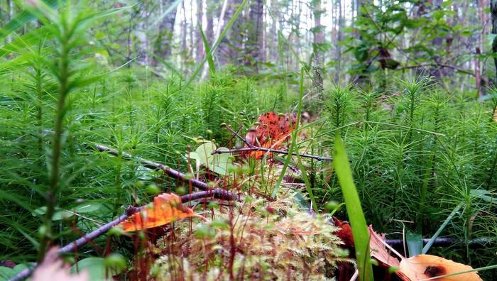 Погулял в обеденный перерыв по лесу и ... Природа, Лес, Люди свиньи, Каменниковский полуостров, Длиннопост