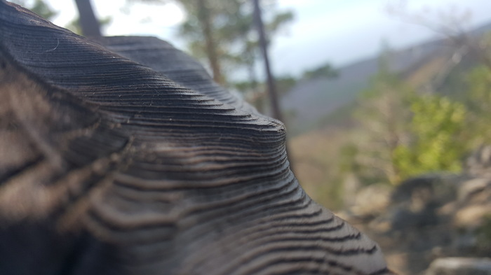 Структура Маркова гора, Пожар, Лес, Байкал, Сосна