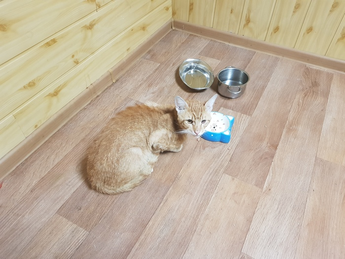 Кот Марсель и психологическая помощь. Кот, Без рейтинга, Позитив, Благодарность, Длиннопост