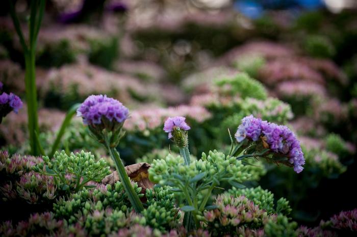 Цветочный джем на Новом Арбате Nikon, Photoshop, Цветочны джем, День города, Длиннопост