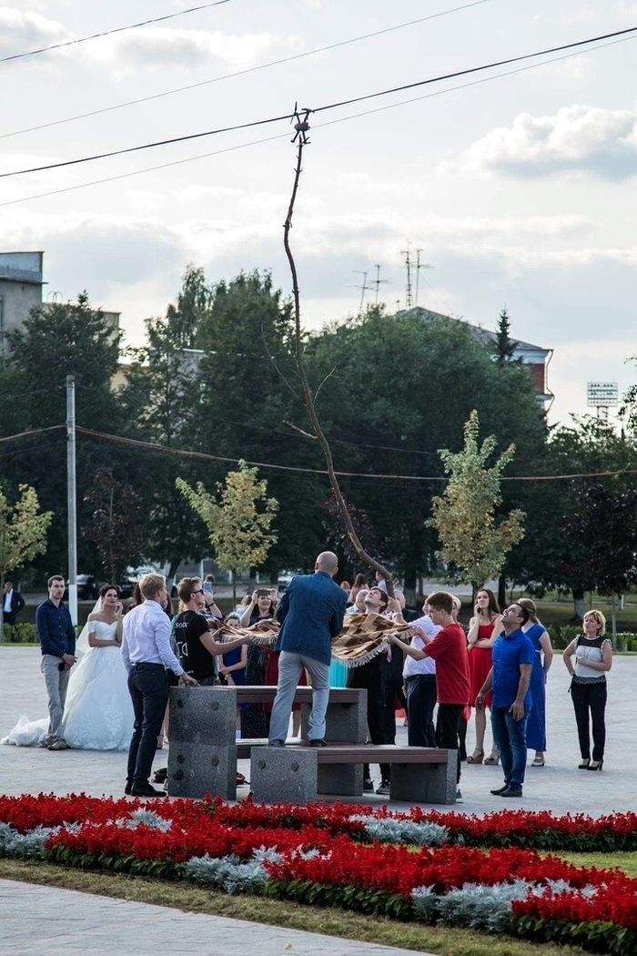 На этой свадьбе все шикарно Коптер, Ковер, Рукожоп, Свадьба, Фотография