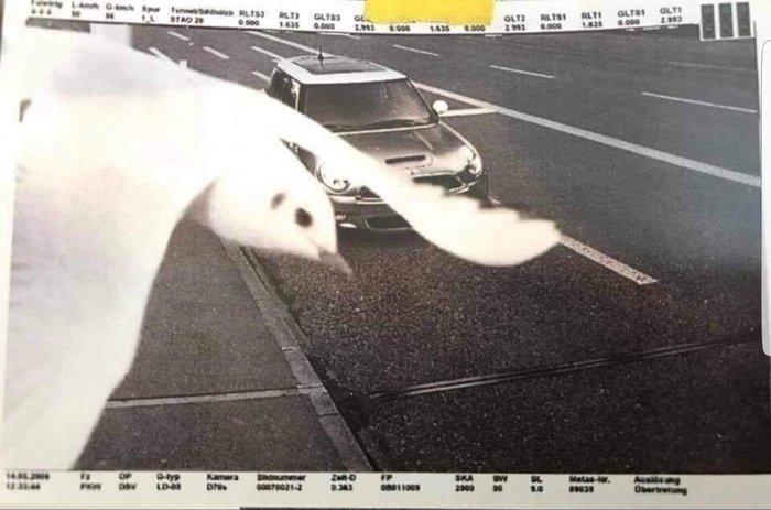 Птица героически спасает водителя от штрафа