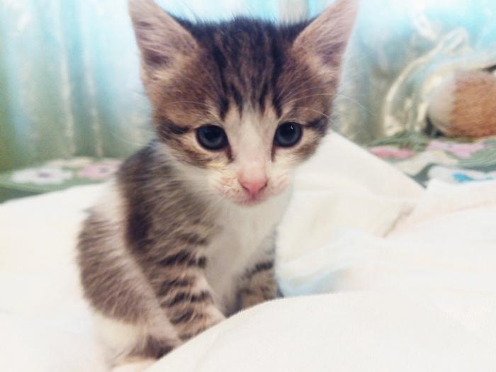 Отдам котят в добрые руки! Новокузнецк Котята, В добрые руки, Отдам, Помощь, Без рейтинга, Длиннопост, Кот, Новокузнецк