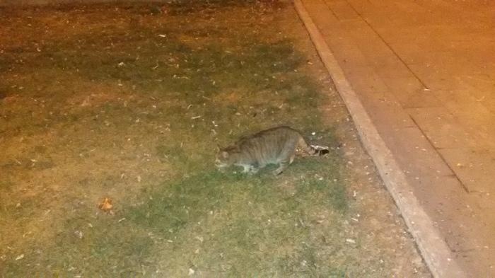 Поиск кота Кот, Потеря, Потерялся кот, Без рейтинга, Помогите найти, Видео, Длиннопост
