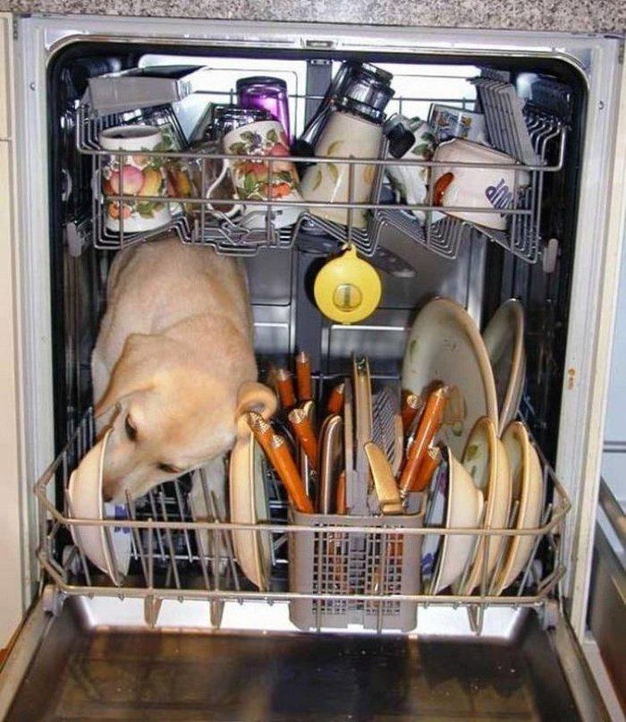 Работа посудомойки. Вид изнутри.