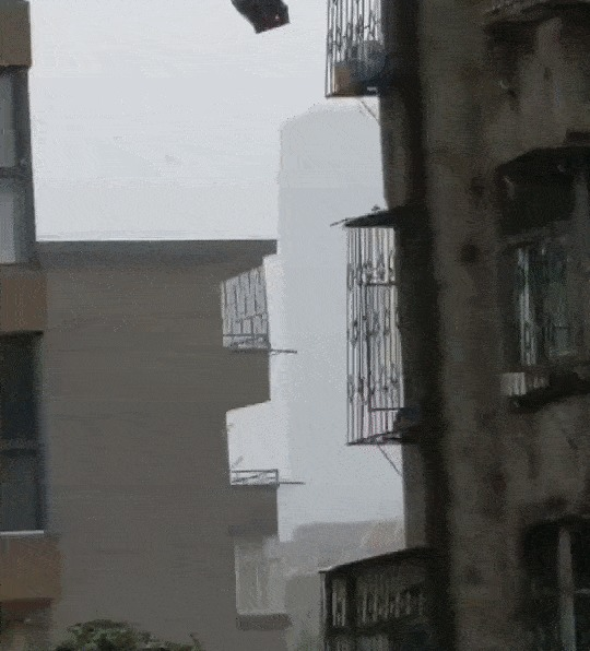На юге Китая тайфун, а тем временем... Китай, Собака, Тайфун, Ураган, Погода, Любовь, Гифка