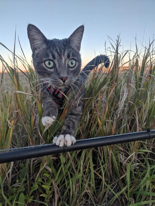Котенок в диких лугах