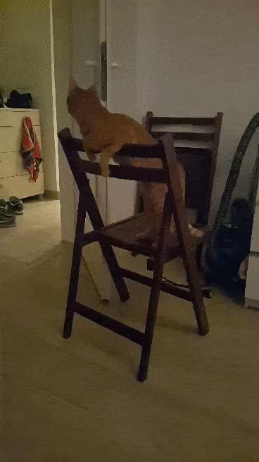 Когда у тебя не самый умный кот...
