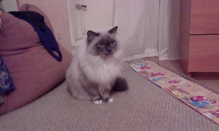 В Тюмени живет самый старый кот, претендующий на рекорд России Кот, Рекорд, Новости, Тюмень, Книга рекордов Гиннесса