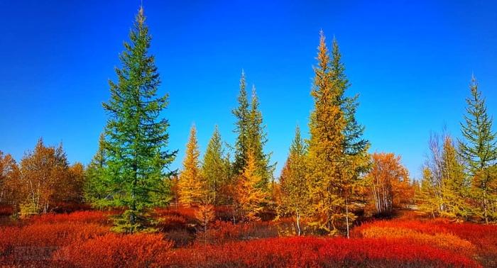 Осень на крайнем севере выглядит примерно так