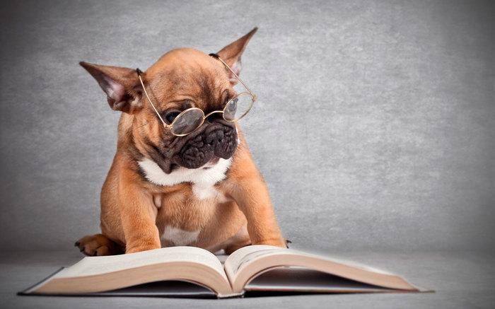 Что почитать о собаках начинающему дрессировщику Служебные собаки, Дрессировка, Воспитание собак, Чтение, Книжная полка, Длиннопост