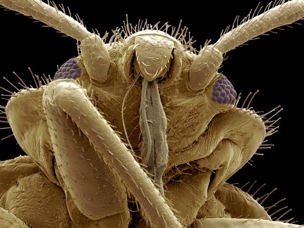 Они живут среди нас - Досье видов и макро фотографии. Насекомые, Зоология, Макро, Животные, Биология, Длиннопост