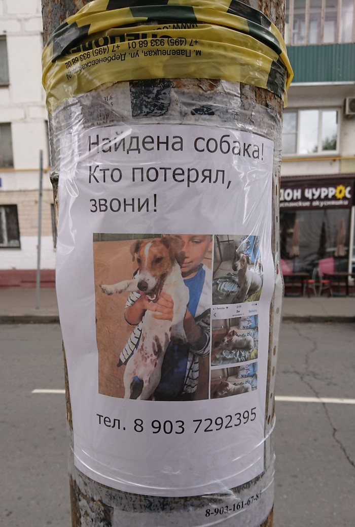 Найдена собака (объявление) Без рейтинга, Пропала собака, Собака, Потеряшка, Найдена собака, Москва