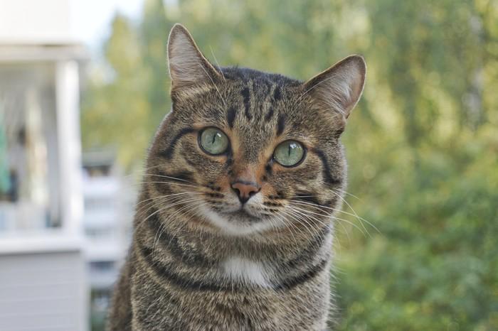 Однажды на балконе Кот, Котомафия, Милота, Балкон, Фотография, Длиннопост, Nikon d5200