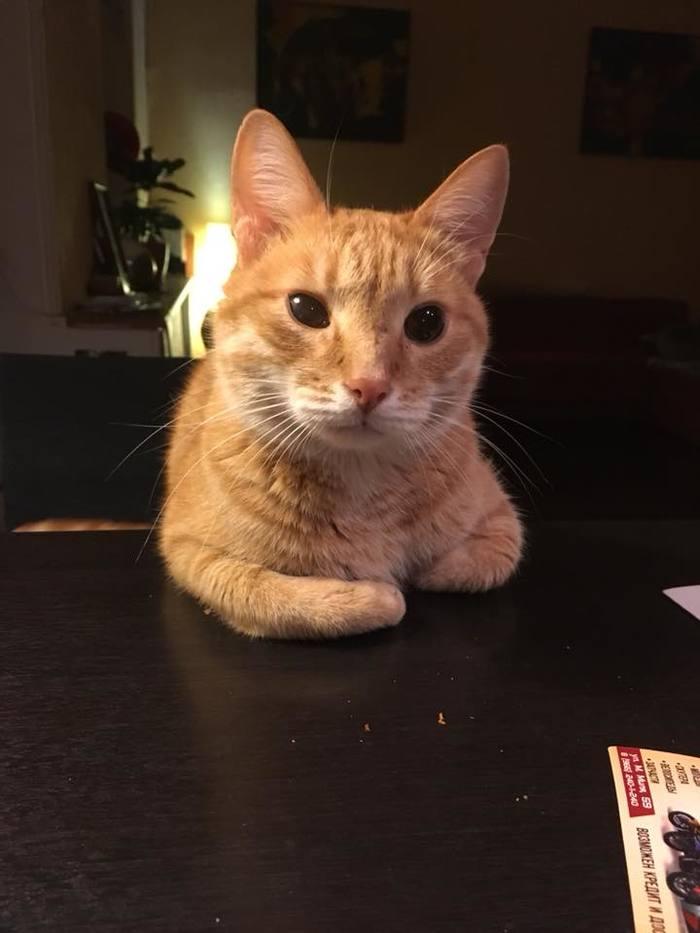 Человек, у меня к тебе серьёзный разговор Кот, Разговор, Длиннопост