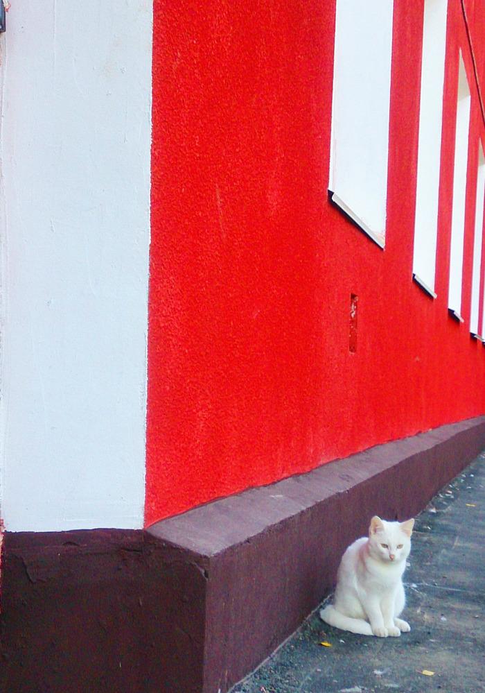 Это не картина Малевича. Кот, Животные, Фотография, Мобильная фотография