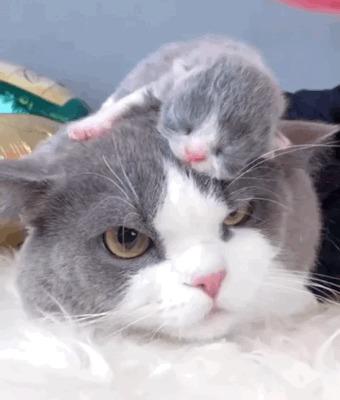 Терпеливый котэ