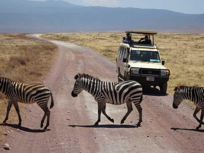 Удобно: где бы ты ни переходил шоссе, там всегда зебра