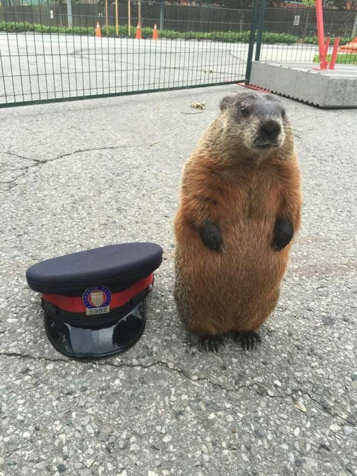 Лесная канадская полиция