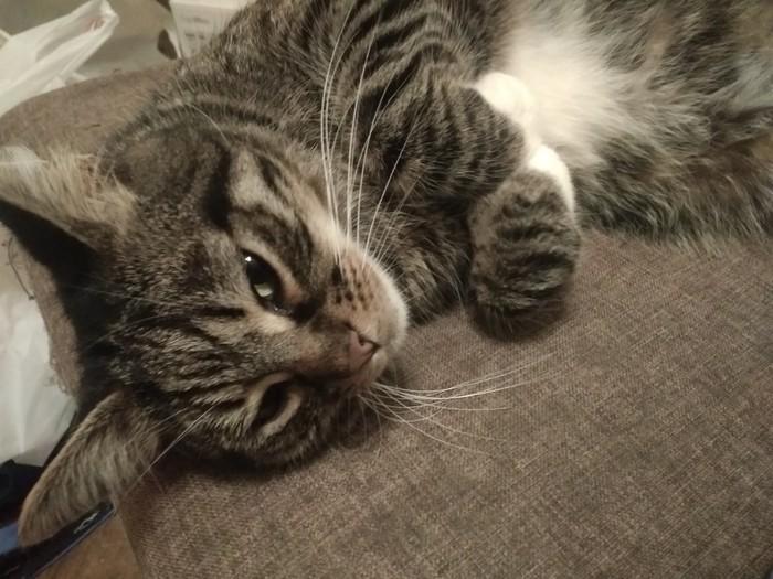 История одного котэ. Кот, Лапки, Пушистый, Длиннопост