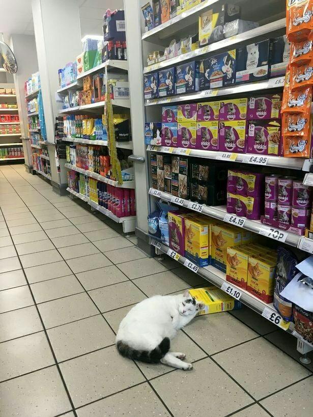 Сытый воришка Фотография, Кот, Супермаркет, Незадачливый воришка, Сон