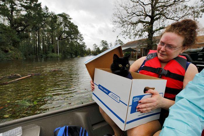 Как во время урагана в США спасают домашних животных. Ураган, США, Кот, Собака, Длиннопост